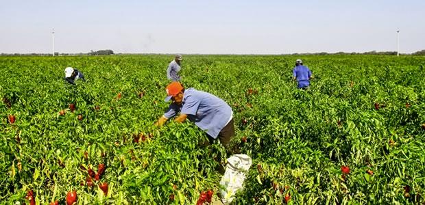 01-agroindustria